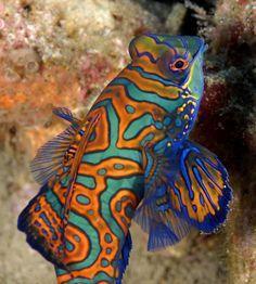 Sea Creatures on Pinterest | Sea Slug, Orcas and Fish
