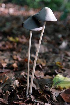 #Pilze im #Herbstwald bei #München