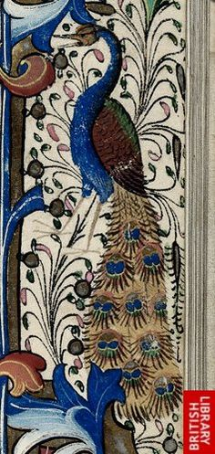 Detail of a peacock, from a floral border, at the beginning of Matins of the Virgin.   Origin:England, S. E. ( London)