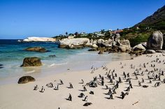 Boulders Beach - Western Cape Boulder Beach, Bouldering, South Africa, Westerns, Cape, Country, Outdoor, Beautiful, Mantle