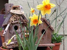 Bird Homes:)