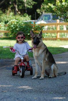 Two peas in a pod German Shepherd Puppies, German Shepherds, Belgian Malinois Dog, Cute Kids Pics, Huge Dogs, Schaefer, Police Dogs, Baby Dogs, Doggies