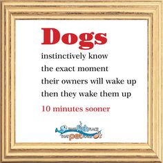 It's funny how that works :)   thatpetplace.com #Dogs #Dog #DogQuote