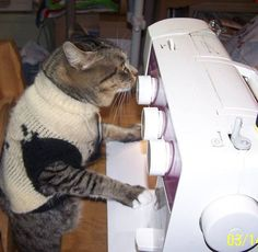 Mr. Bo Jangles! I didn't know you knew how to sew!