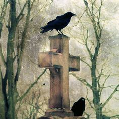 Urban crows at the graveyard.
