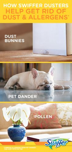 Get rid of common allergens like pet dander and pollen, and reach all those high up spots you may have missed with Swiffer Dusters Find out how you can easily get a good health and beauty product like tattoos and body art for yourself.
