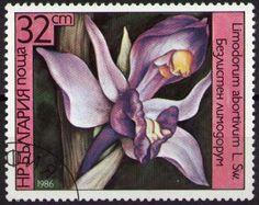 Znaczek: Limodorum abortivum (Bułgaria) (Orchids) Mi:BG 3444A,Sn:BG 3143,Yt:BG 2990,Sg:BG 3321,AFA:BG 3352