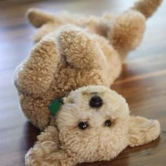 How cute is this gorgeous dog?  Sssqqqquuueeezzzee