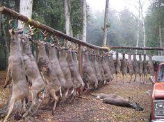 Lucky Deer camp.