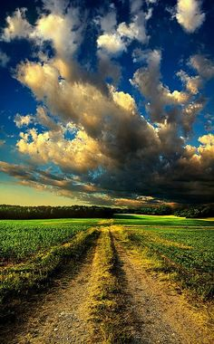 Dirt Road Canvas Print Canvas Art by Phil Koch: