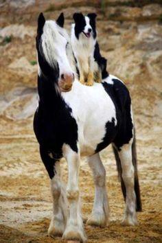 Buddies, friends, friendship, dog, horse, hest, riding, cute, nuttet, furry, animal, alert, photo, beautiful.