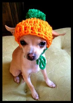 Crocheted Chihuahua Pumpkin Beanie. Oh my Rocky needs this.