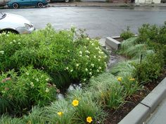 Curb Cut and Bioretention Basin