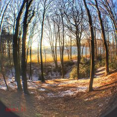 "Gestern #iphone6sphotography #olloclip #fisheye #wald #forest #winter #snow#schnee #loves_united_trees #ig_nrw #Ruhrgebiet #love_ruhrgebiet #trees #nature #naturelovers #februar2016 #unterwegs #hollygo #sprockhövel #sprockhövellove #heimat #heimatliebe #skylovers #like4like #beautiful #follow #cool by molto_11 Follow ""DIY iPhone 6/ 6S Cases/ Covers/ Sleeves"" board on @cutephonecases http://ift.tt/1OCqEuZ to see more ways to add text add #Photography #Photographer #Photo #Photos #Picture…"