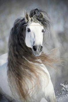 Horses:  Gorgeous.