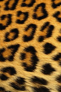 Beautiful Leopard Print iPhone 4 Wallpaper Wallpaper HD iPhone 4 and 4s