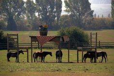 No le permitían construir refugio para sus caballos, por lo que construyó una mesa y una silla, sin infringir la ley.
