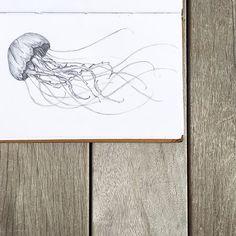 Day 27 - Something From the Ocean   Jellyfish. #wondershins #drawingchallenge #creativechallenge #sketch #illustration #sketchbook #jellyfish #oceancreatures