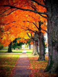 sidewalk thru fall