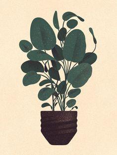 Bulb plant.