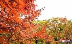중앙식물원의 이채로운 가을풍경