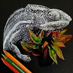 8,983 отметок «Нравится», 13 комментариев — World of Pencils (@worldofpencils) в Instagram: «Chameleon drawing by artist @ryans_drawing #supportart #worldofpencils .»