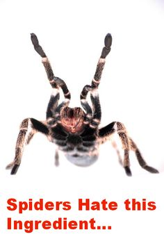 How to Scare Away Spiders from Your Home Naturally!
