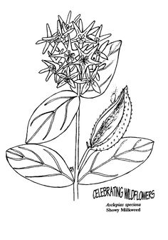 Wild Flowers Coloring Pages