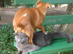 Dog on cat