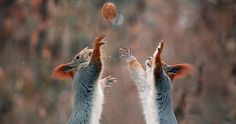 A Russian Photographer Documents A Squirrel Photo Shoot