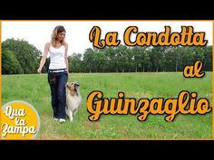 Addestramento/Educazione cani n°7 - Cane che tira al guinzaglio: la CONDOTTA | Qua la Zampa - YouTube