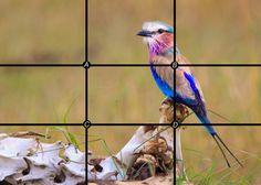 La regola dei terzi : La composizione fotografica: Una delle regole fondamentali della composizione fotografica è la regola dei terzi: per ottenere una fotografia bilanciata ed efficace, che crei un interesse, il soggetto non dovrebbe mai essere inquadrato al centro dell'immagine. Ovviamente con le dovute eccezioni. Avrete sicuramente notato che in alcune fotocamere è possibile attivare una griglia che forma nove quadranti: due linee orizzontali e due linee verticali come quella...