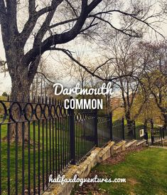 When I first moved to the City, I dismissed Dartmouth Common because I just assumed it wouldn't be dog-friendly. Coming from Fredericton, a decidedly dog-UNfriendly city, I was surprised to l… Dartmouth Nova Scotia, Dartmouth Park, Park Trails, Urban Park, The Province, Dog Friends, Best Dogs, Destinations, To Go