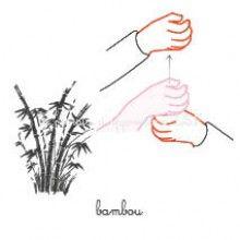 bambou LSF