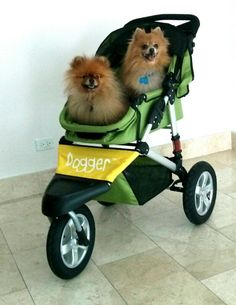 """Alfie and Milo are riding high in Panama in their Dogger. """"They love their new ride. Thanks for a quality product.""""   Carolyn and Robert Volpe, Panama #dogger #pom #pomeranian"""