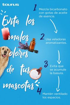 Love Pet, I Love Dogs, Inmobiliaria Ideas, Neko Cat, Great Pyrenees, Instagram Story, Dog Cat, Kitty, Puppies