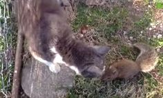Fearless Baby Squirrel Walks Right Up to Cats & Plays (Video)