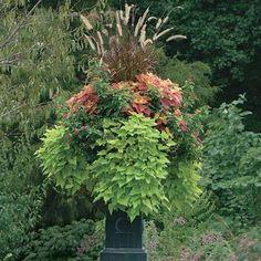 Beautiful garden pot ideas