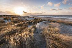The golden dunes Scheveningen Holland. Dune, Beautiful Places, To Go, Mountains, Beach, Water, Canvas, Travel, Outdoor