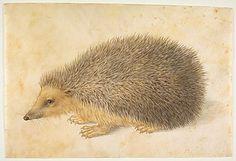A Hedgehog (Erinaceus roumanicus) -   Hans Hoffmann (German, Nuremberg ca. 1545/1550–1591/1592 Prague)  Date: before 1584
