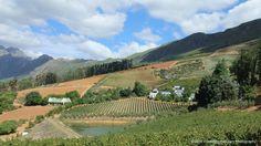 Bartinney Estate - Wine Tourism South Africa