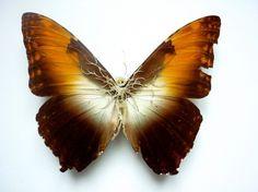 http://www.boumbang.com/sabatte-lionel/ Lionel Sabatte, Reparation de papillon 5