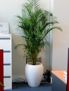 A tall indoor plant might be the things for that corner spot in the kitchen, instead... but I doubt the child safety-ness and the endurance of a plant like this in that spot