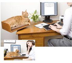 Me encanta! Poder llevarte a tu gato al trabajo :)