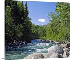 Trees and rocks along clear mountain stream, spring, Alaska