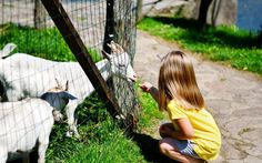 It's a zoo out there! Avoiding E. coli related illness at animal exhibits and petting zoos