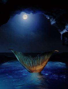mako mermaids mermaid - Google Search