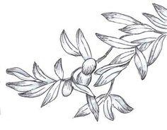Athena--Olive branch