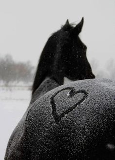 Snow flurries on a fuzzy butt (this one was hard to decide.....Hearts, Snow or Magnificent Animals!)
