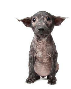 La imperfección perfecta: la belleza de los perros que viven con algún problema físico | SrPerro.com, la guía para animales urbanos.